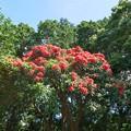 写真: 熱川バナナワニ園P1070699