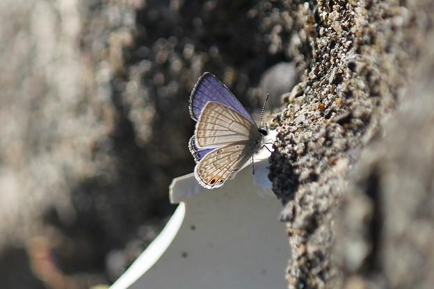 とても寒がりだった蝶