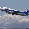 写真: B737-500 JA8196 takeoff