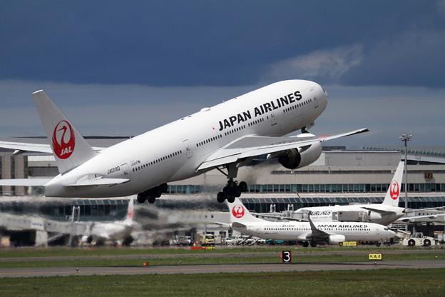 B777&B737 JAL