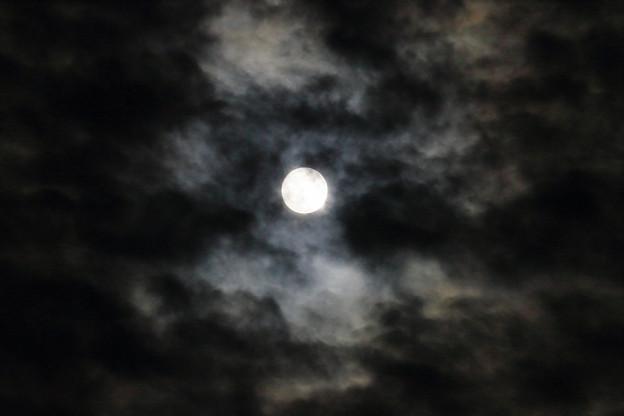 中秋の名月 月齢は14.4 (1)
