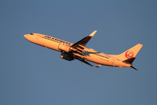 Photos: B737 JAL JA344J 夕陽に染まる