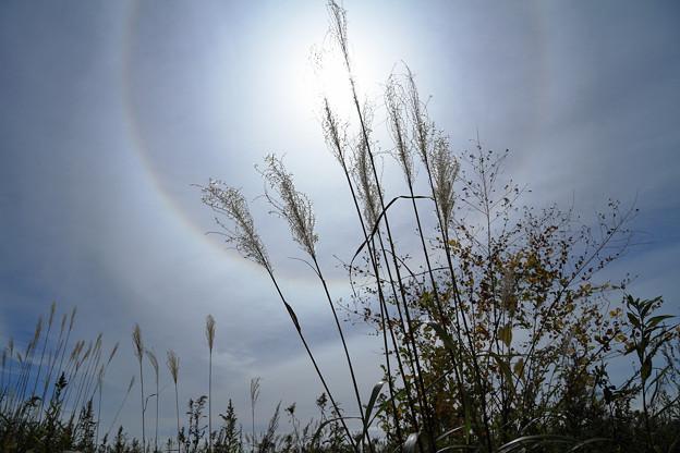 秋の野 (2)