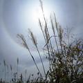 写真: 秋の野 (2)