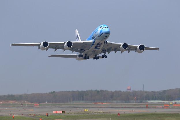 A380 ANA JA381Aがtakeoff (1)