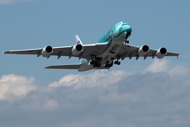 A380 ANA JA382A 飛来 2回目 (3)