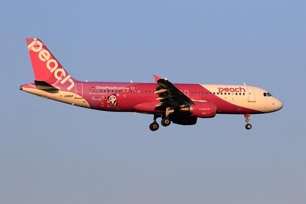 A320 Peach JA816P approach
