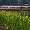 Photos: 菜の花と…