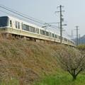Photos: 梅と221系