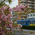 桜?と阪堺電車