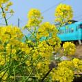 Photos: 和歌山線 117系