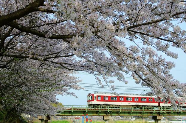 大和川の桜:近鉄大阪線