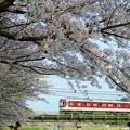 写真: 大和川の桜:近鉄大阪線