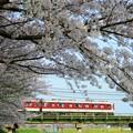 Photos: 大和川の桜:近鉄大阪線