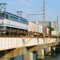 写真: 84レ【EF65 2085牽引】
