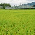奈良線:205系
