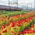 Photos: 鮮魚列車