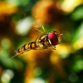 Photos: 飛翔中