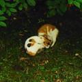 猫を撮る(2)