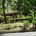 Photos: 台風一過