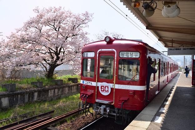 還暦の赤い電車と桜