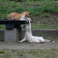 公園の猫♪