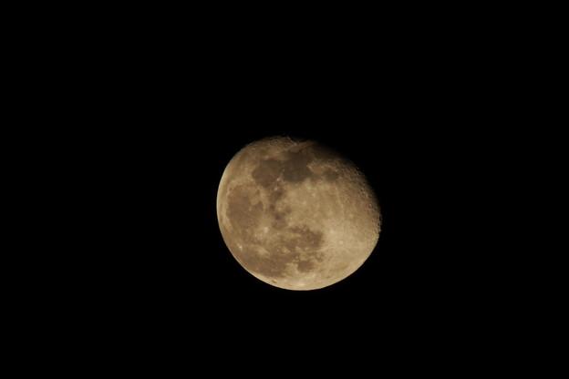 月齢 16.6