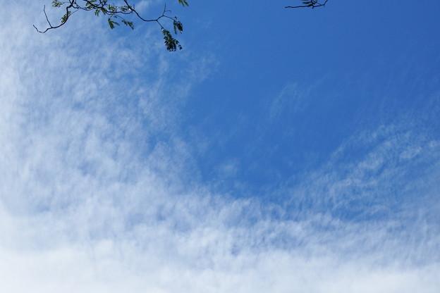 Photos: 梅雨明け 2