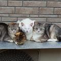 Photos: 猫団子