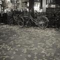 秋葉の落葉(処理違い)