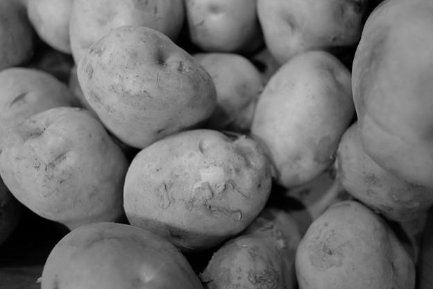 Photos: ジャガイモ