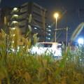 写真: エノコログサ