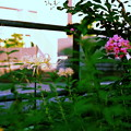 写真: 盛夏と中秋