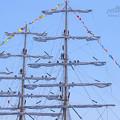 2018 長崎帆船祭り7