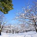 Photos: 春ヲ想フ