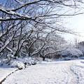 Photos: 白い並木道 2