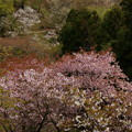 Photos: 眼下の春模様