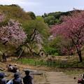 関山ベンチからの眺め