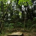 石舞台の森