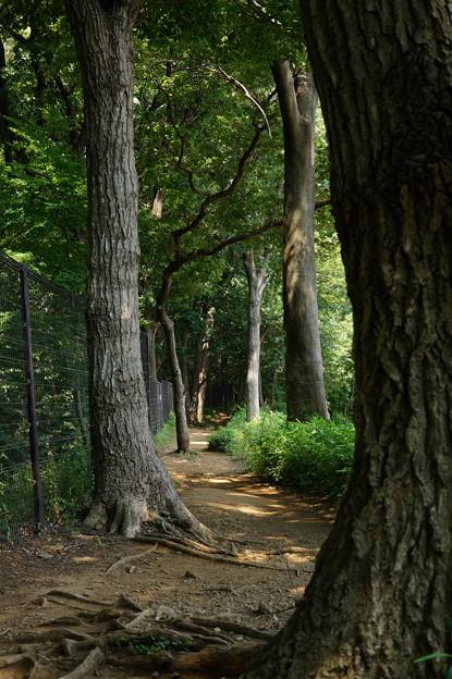 木漏れ日の側道を行く