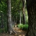 写真: 木漏れ日の側道を行く