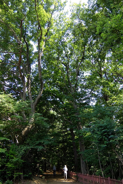 背の高い樹々のエリア
