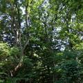 写真: 背の高い樹々のエリア