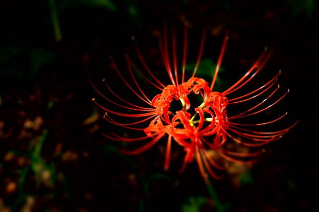 暗がりに咲く(木漏れ日のスポットライト 3)