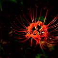 写真: 暗がりに咲く(木漏れ日のスポットライト 3)