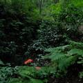 森に紅差す