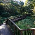 Photos: 始まりの木道