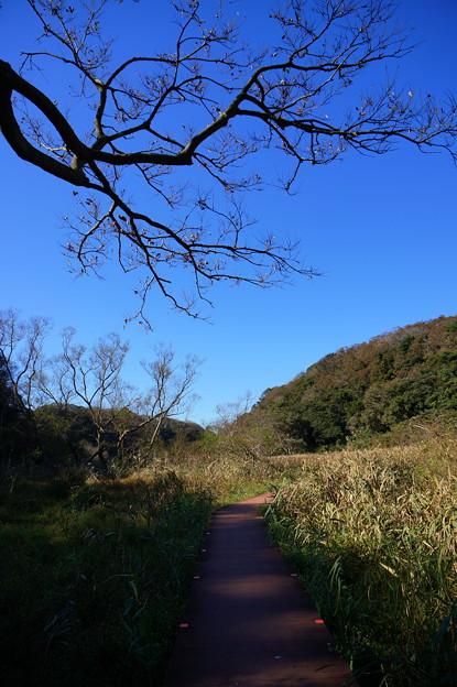 Photos: 榎のある野原