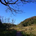 写真: 榎のある野原