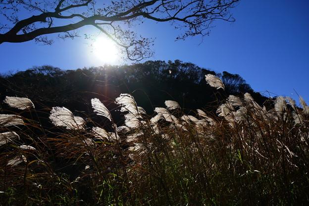 写真: 朝陽に輝く